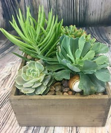 Assorted succulents with ocean accents in driftwood box