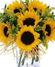Bold yellow sunflowers and Solidego in glass vase
