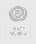 48 Red Roses