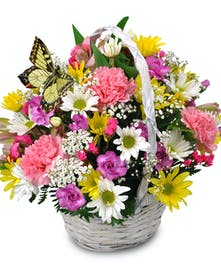 Daisies, carnations, and fresh spring blooms arranged in a designer basket with a fluttering butterfly clip.