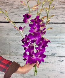 tropical orchid stems to add to an arrangement