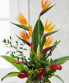 Tall arrangement of bird of paradise, anthurium, and tropical blooms in a low dish