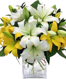 Abundance of white and yellow Asiatic Lilies in glass vase