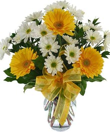 Yellow and white Gerbera Daisies and daisy-poms in a vase