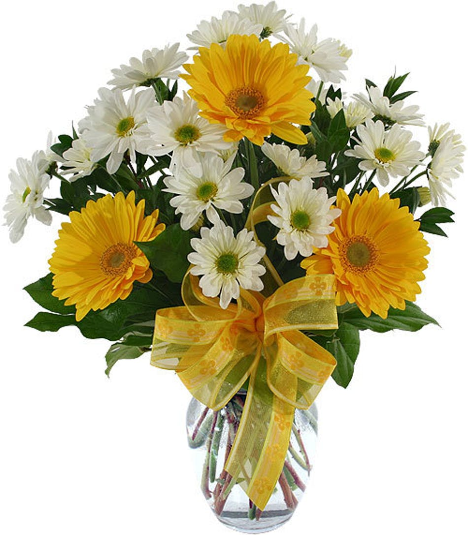 Baby love yellow and white gerbera daisies and daisy poms in a baby love yellow and white gerbera daisies and daisy poms in a vase anchorage ak florist flower delivery bagoys florist gifts reviewsmspy