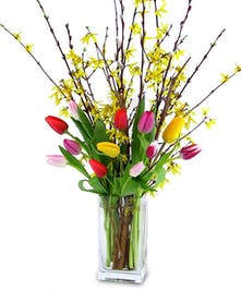 Assorted color Tulips and yello Forsythia brances in glass vase