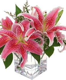 Sweet scented, compact Stargazers in cube vase