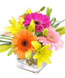 Gerbera daisies, asiatic lilies, and bright greens arranged in a glass cube vase.
