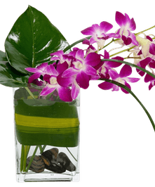 Multiple Dendrobium Orchid stems with artisitc greenery in vase