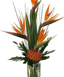 Bird of Paradise, Pin-Cushion Protea, topical greenery in vase