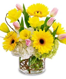 Bold yellow Gerberas and Tulips with Hydrangea in glass vase