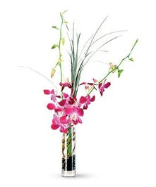 Varigated purple Dendrobium Orchids stems in bud vase