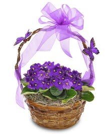 Hearty, blooming African Violets planted in basket with butterfly trim