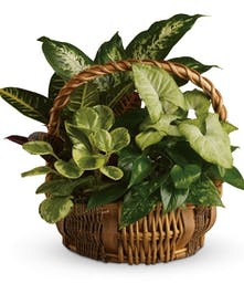 Natural basket of assorted green plants