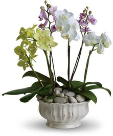 A collection of seasonal orchid plants in keepsake container