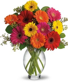 Brightly colored Gerbera Daisies in vase