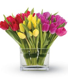 Tulips Together