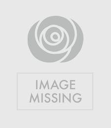 Hollywood Corsage