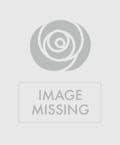 As Shown--10 Calla Lilies
