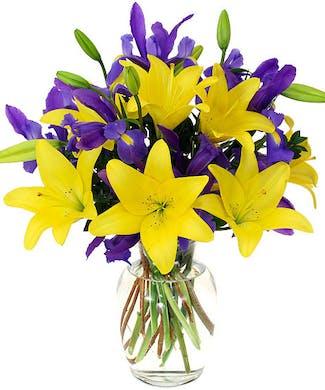Iris Lily