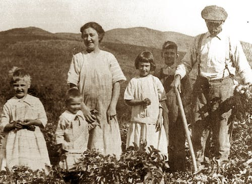 Working the flower fields with the whole family, circa 1930